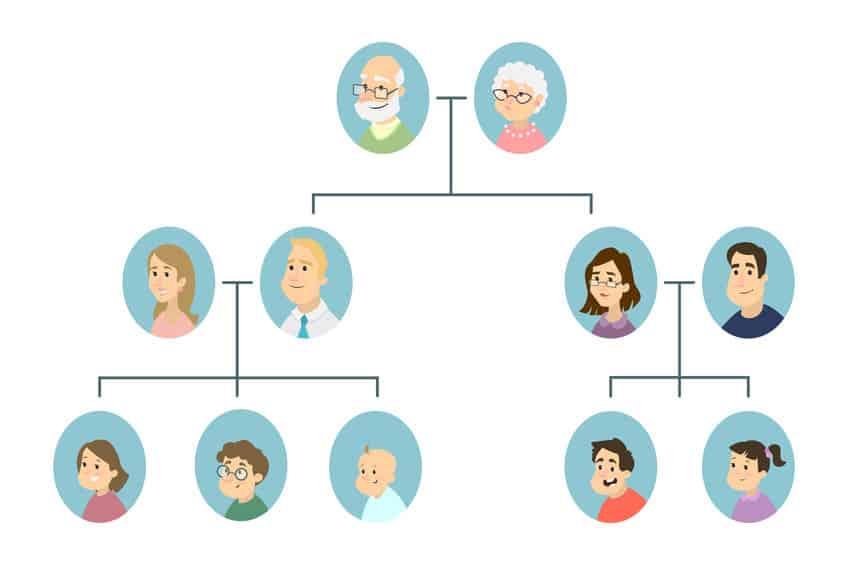 Kolena-sorodstva-drugo-koleno-Družinsko-drevo